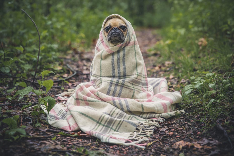 hondje in deken